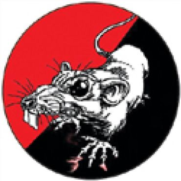 Ratte 1